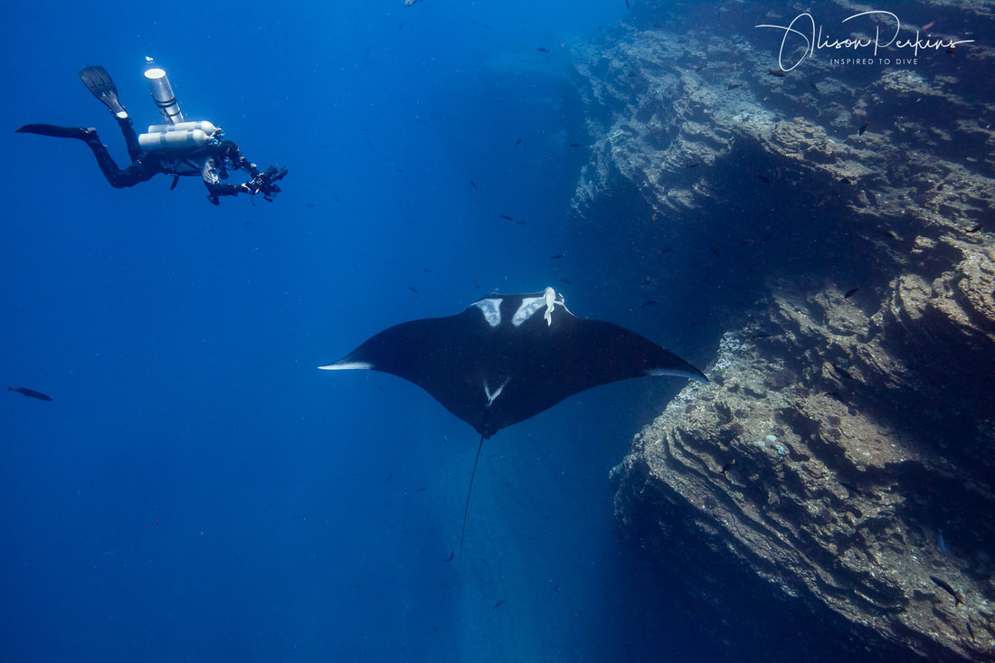 JP Bresser photographs a manta ray at The Boiler, San Benedicto, Mexico