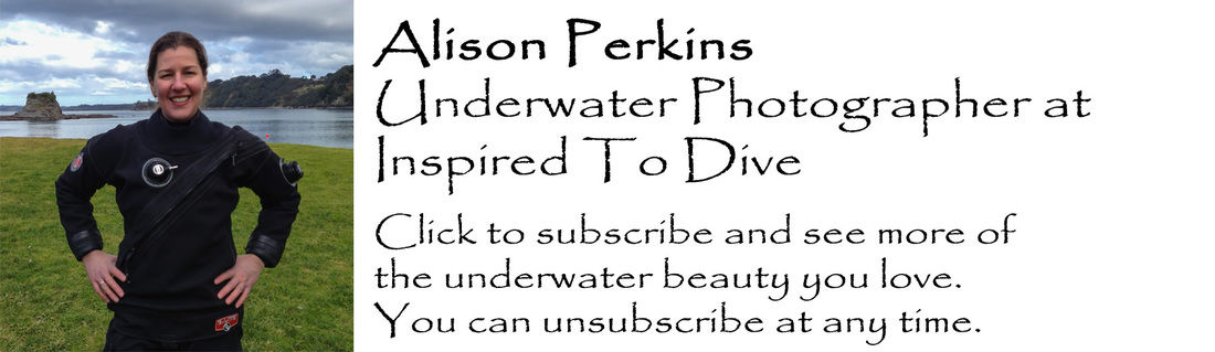 Underwater photographer Alison Perkins in New Zealand